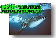 Ed Robinson's Diving Adventures - Maui